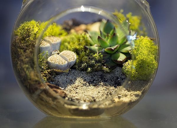 Everything You Need To Know About Making A Terrarium