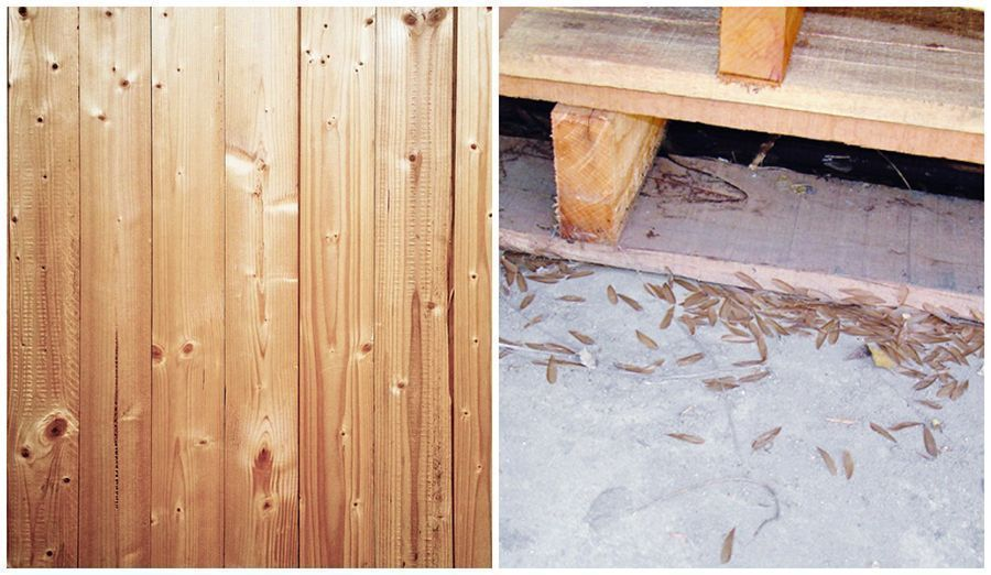 All You Need to Know to Keep Termites Out of Your Property