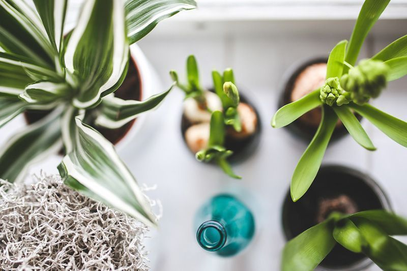 10 Ways to Go Green at Home