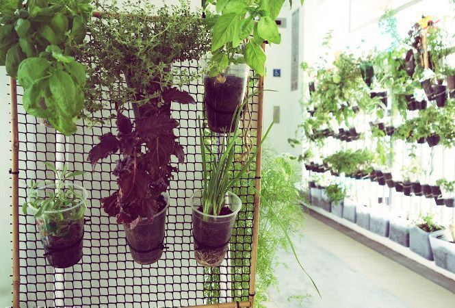 Hdb gardening guide plants to grow indoors and outdoors for Indoor gardening singapore