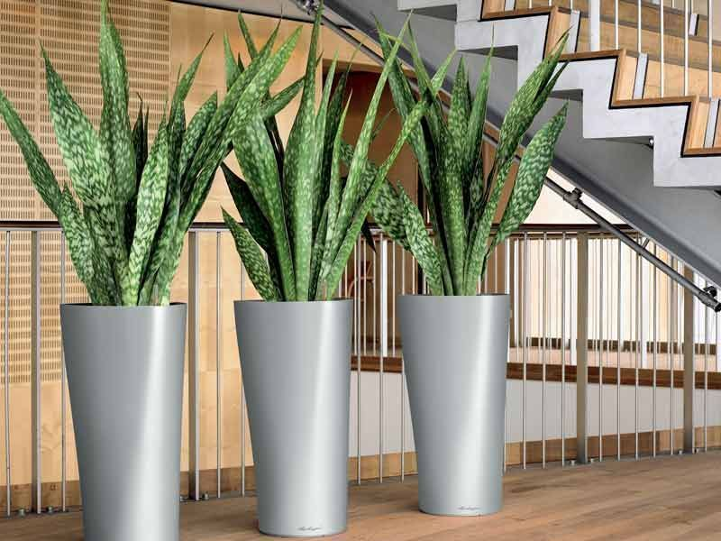 hdb gardening guide plants to grow indoors and outdoors