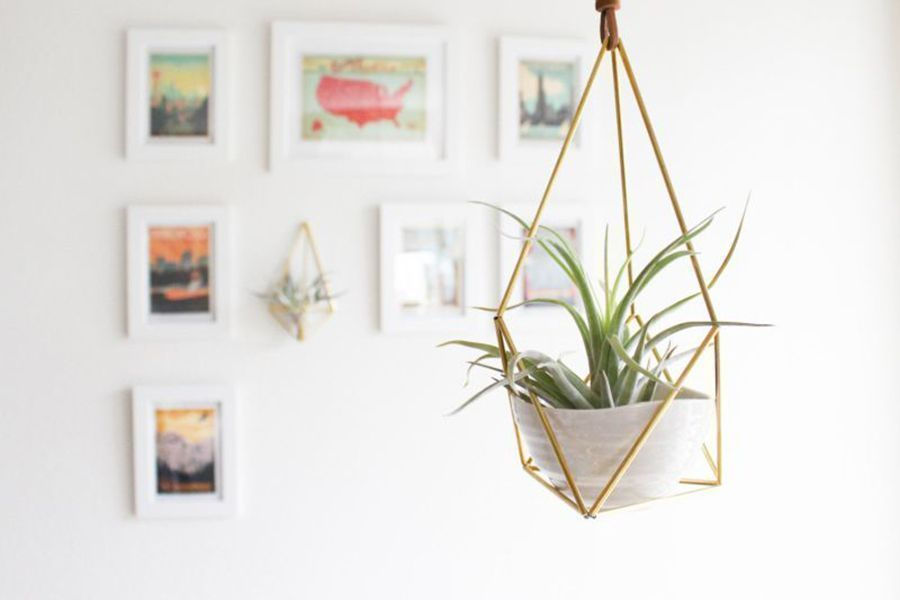 Tips on Growing and Caring for Air Plants