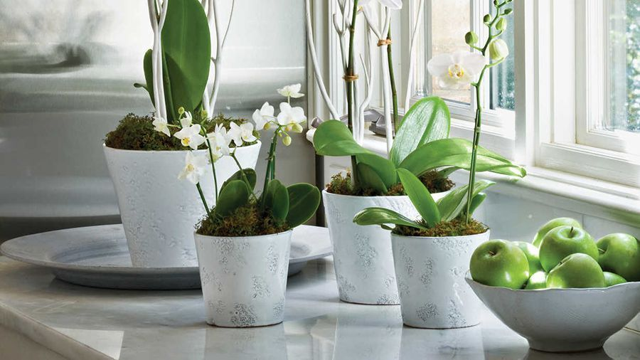 8 Flowering Houseplants That Can Purify Your Air