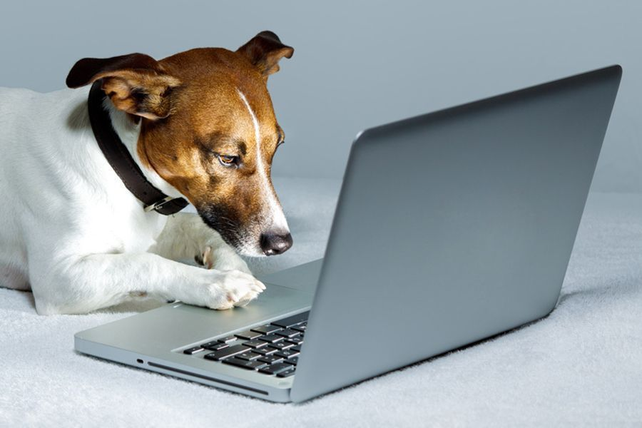 How to Protect your Gadgets from Pets