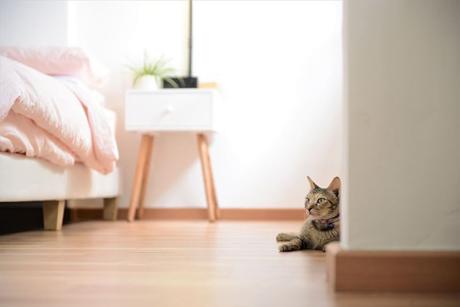 How to Cat-Proof Your HDB Apartment