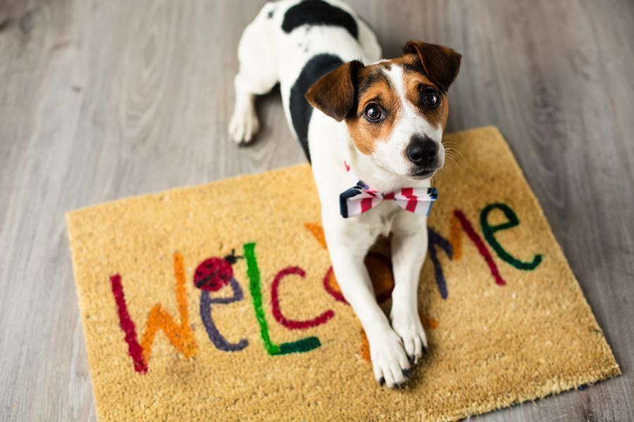 Video: Tips for Living in Small Spaces with Pets