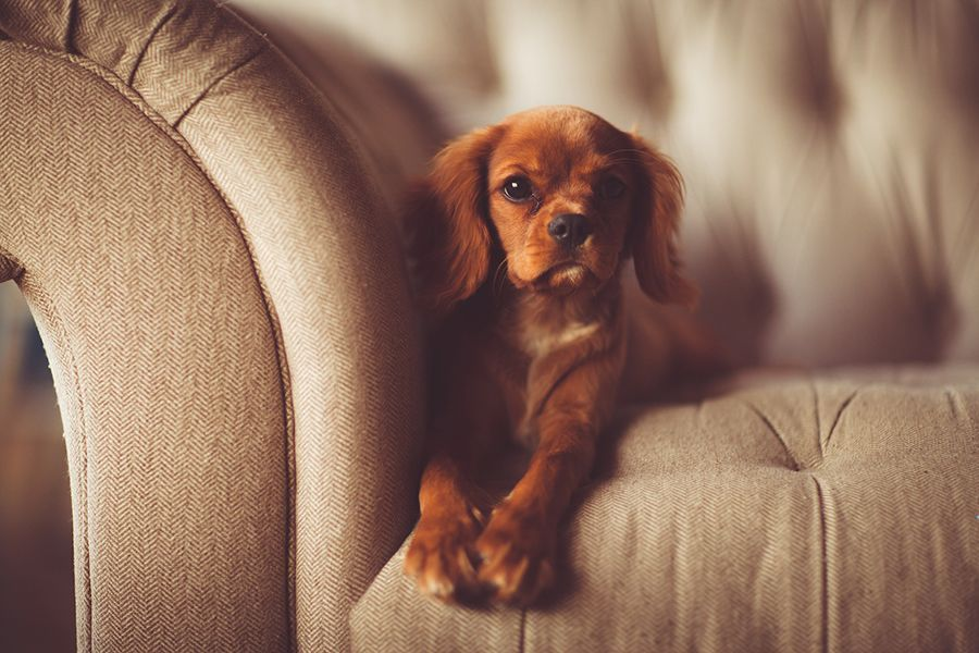 Tips on Clearing Pet Shedding