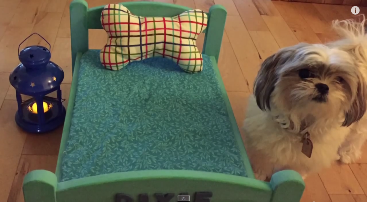 Video: DIY Adorable Dog Bed