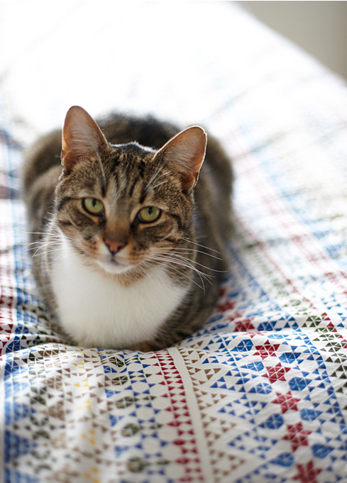 9 Cool Home Items for Your Pet Cat