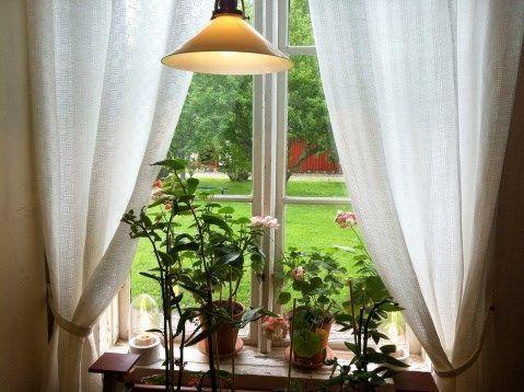 Styling a Windowsill Garden