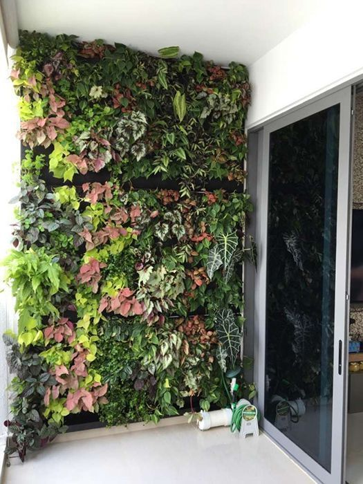 6 reasons to grow a vertical garden at home for Indoor gardening singapore